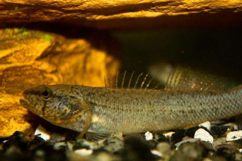 Wolf creek national fish hatchery jamestown kentucky for Virginia fish hatchery
